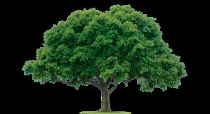 tree-large