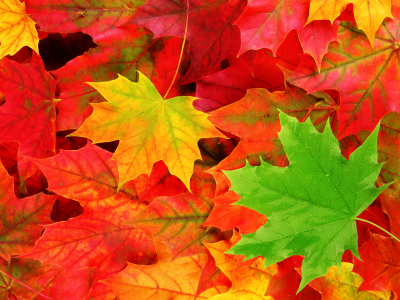 Best-Fall-Leaves.png