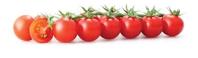 2394629_240624_tomato20for20letterhead