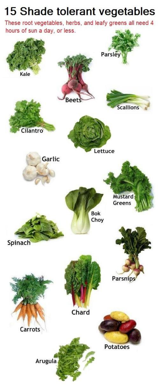 43-shade-tolerant-vegetables